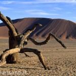 06 Namibia -dune albero morto 2
