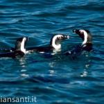 44 Namibia-luderitz pinguini