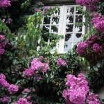 57obidos-finestra fiorita