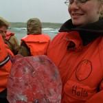 islanda- laguna glaciale guida