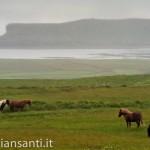 islanda- vivere liberi